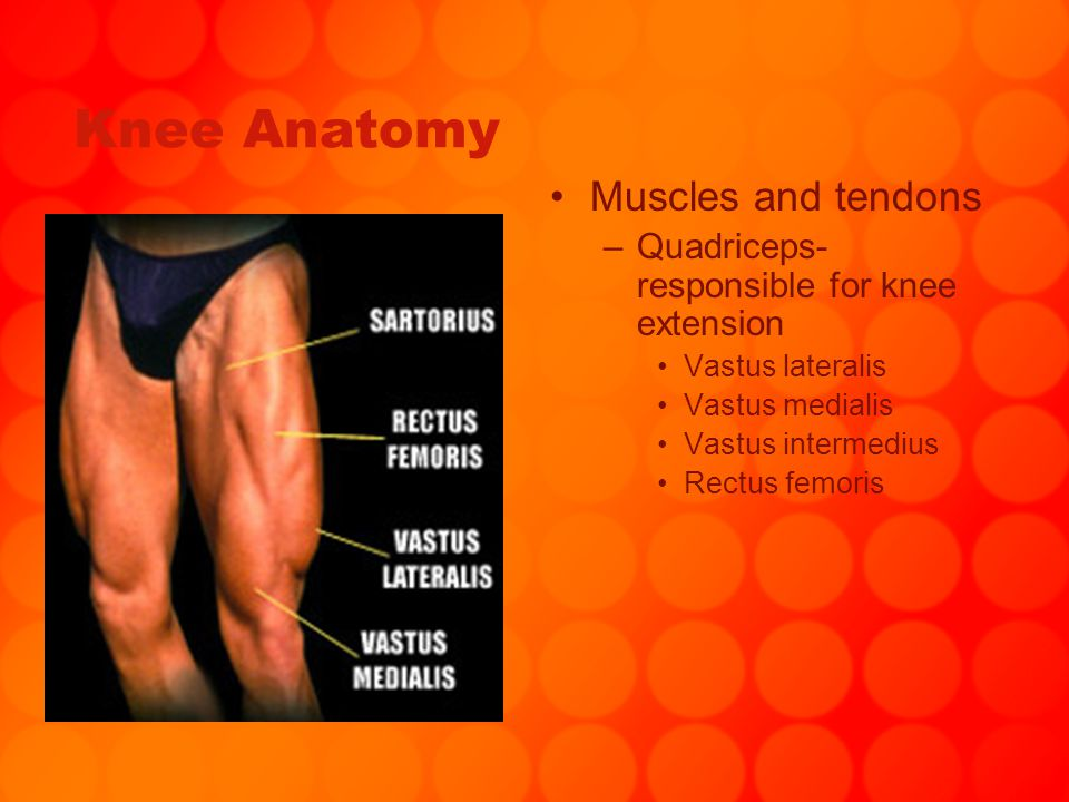 Chapter 14 Knee Injuries. - ppt download