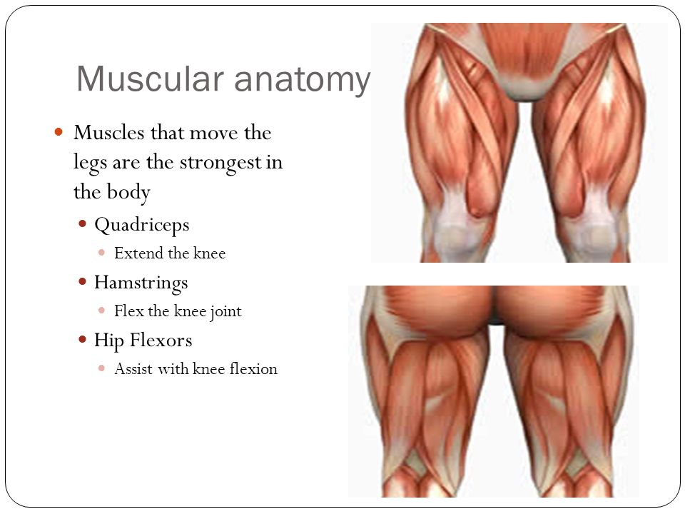 The Knee. - ppt download