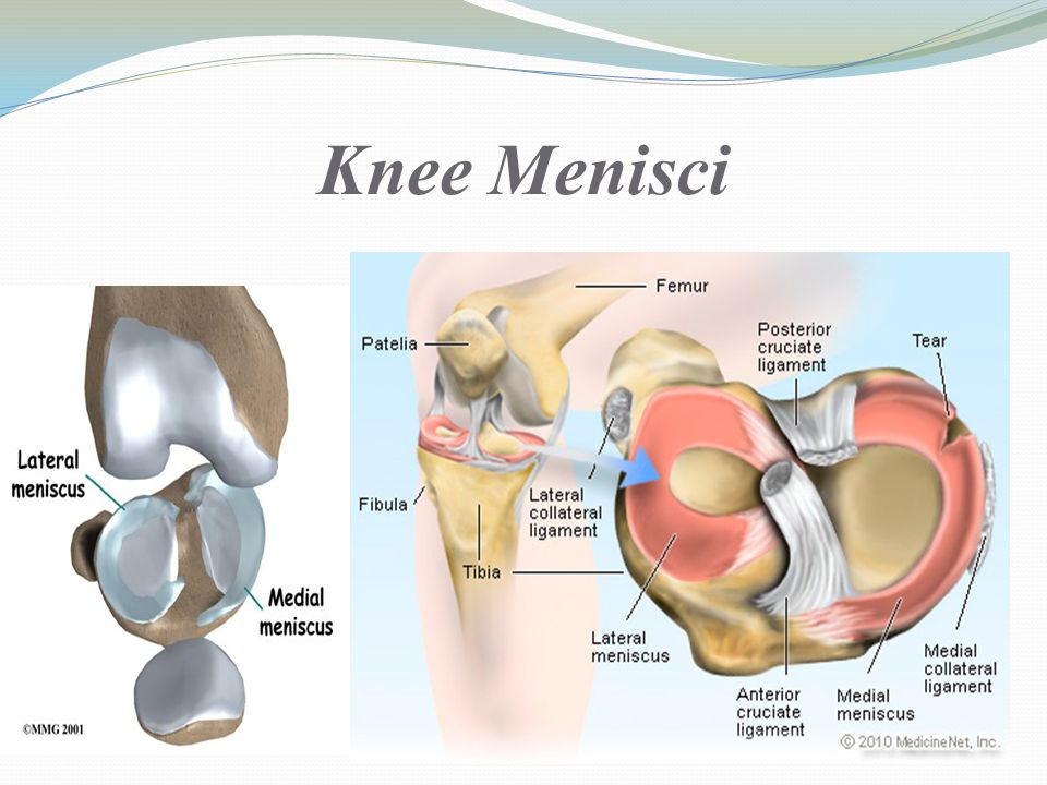 Knee joint Lecture ppt video online download