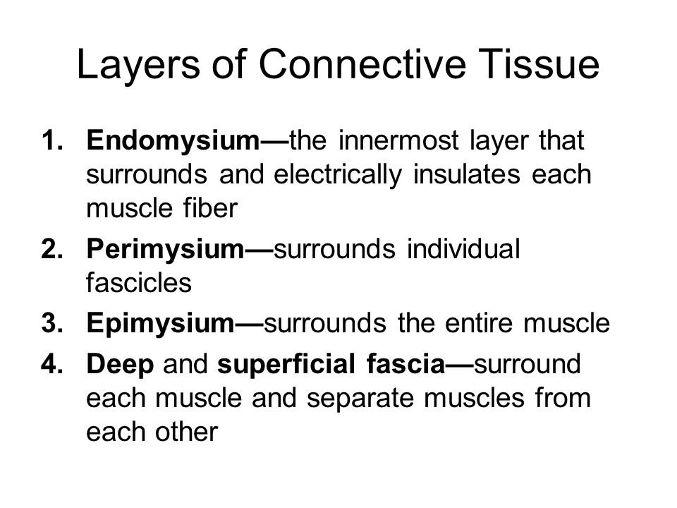 what insulates each muscle cell
