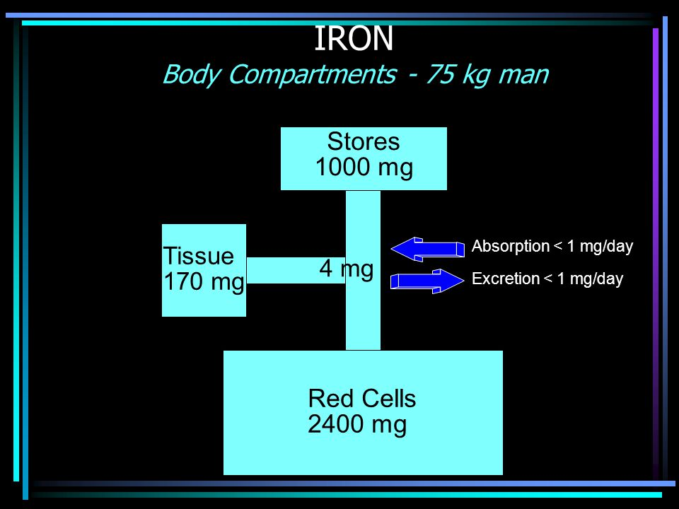 IRON Body Compartments - 75 kg man
