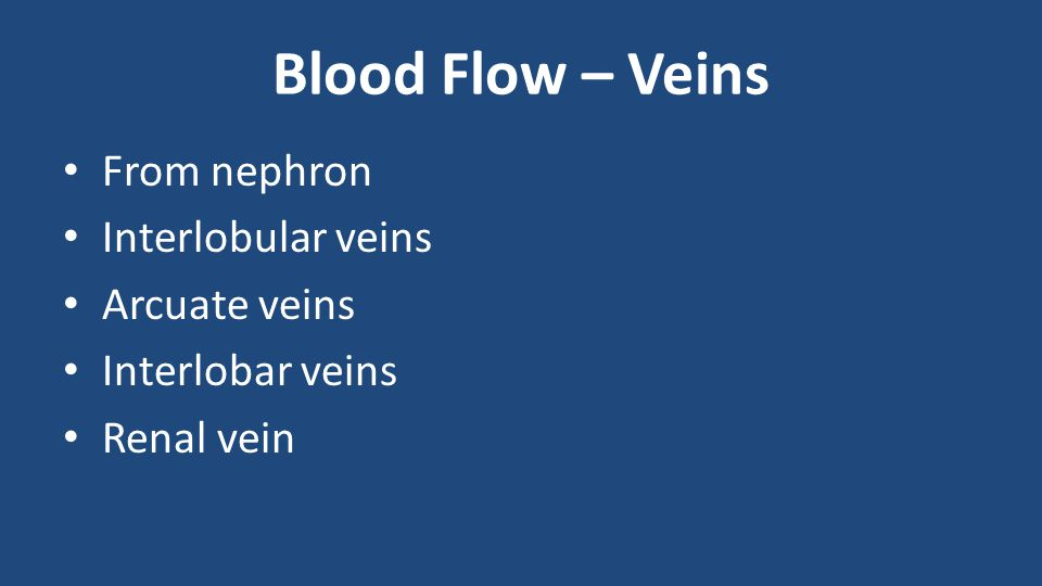 Blood Flow – Veins From nephron Interlobular veins Arcuate veins