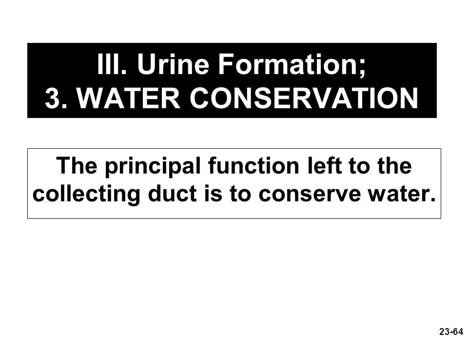 explain the process of urine formation