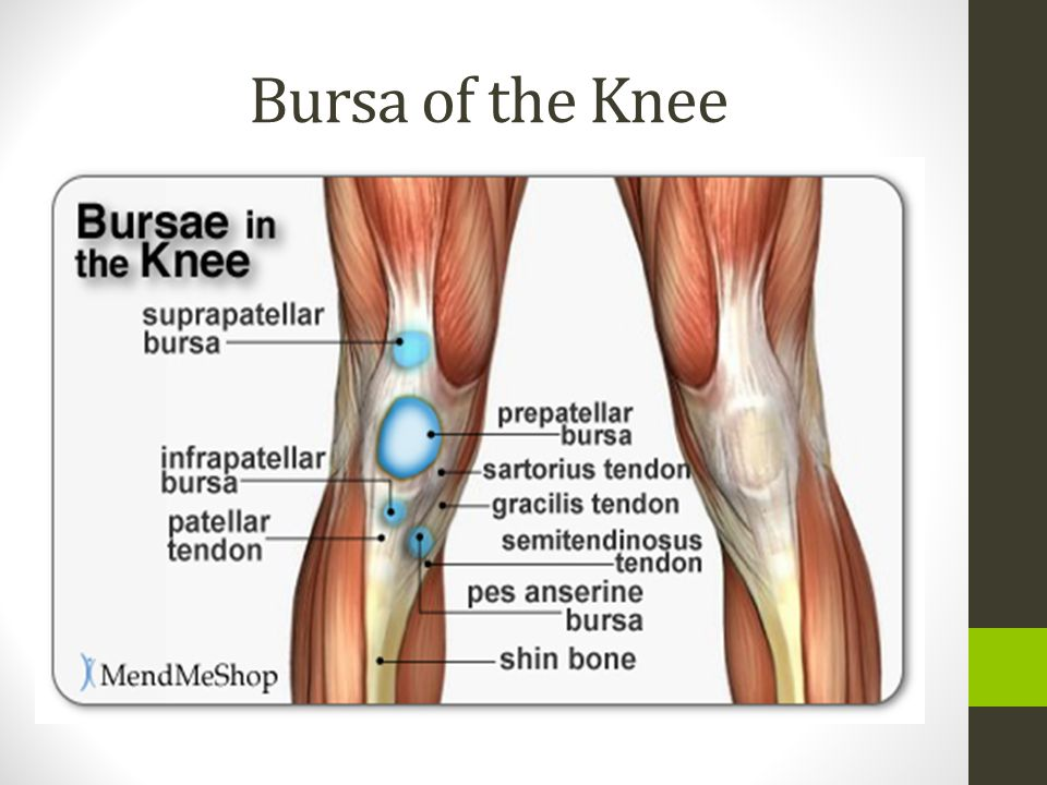 Anatomy Of The Knee Ppt Download