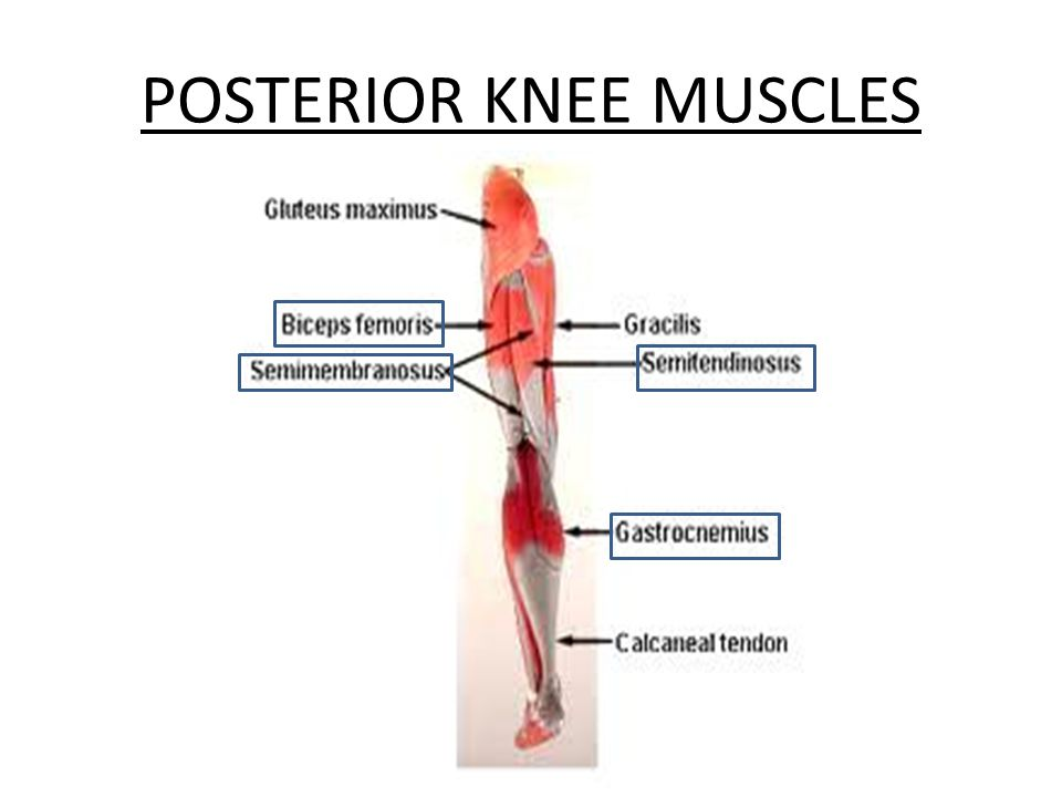 Exelent Back Of Knee Anatomy Sketch - Human Anatomy Images ...