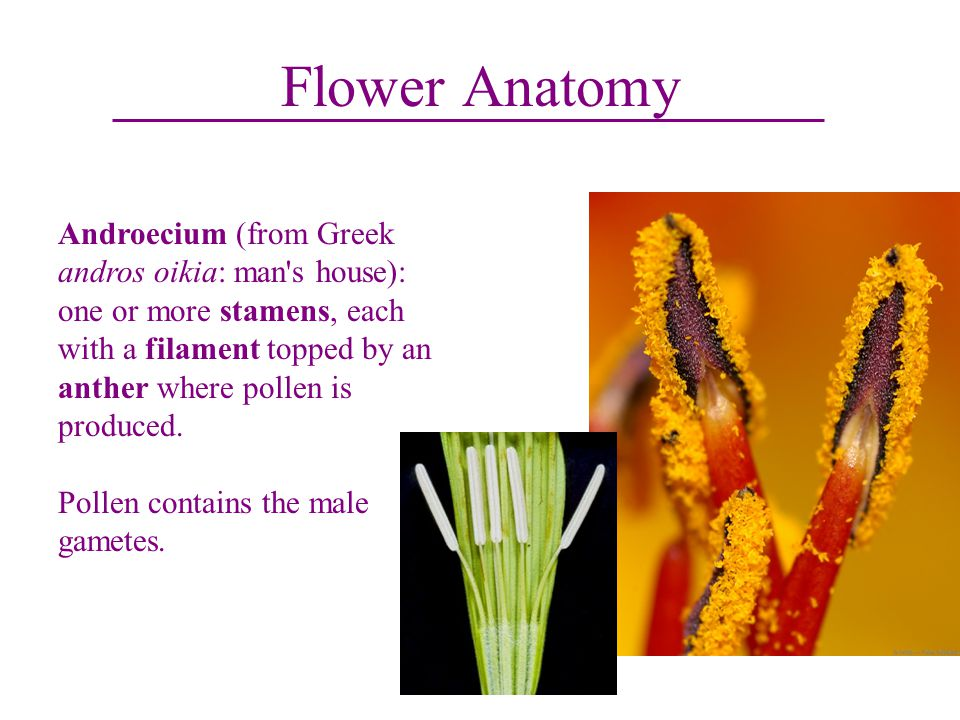 Plants and People Flowers. - ppt video online download
