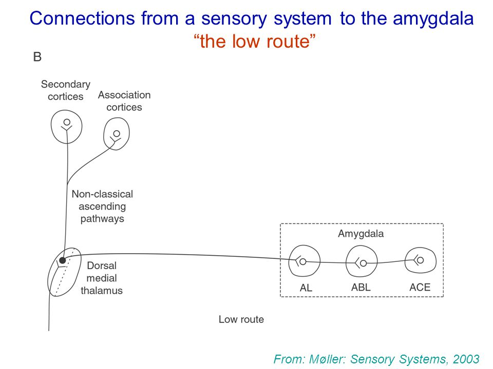 CHAPTER 3 SENSORY SYSTEMS - ppt download