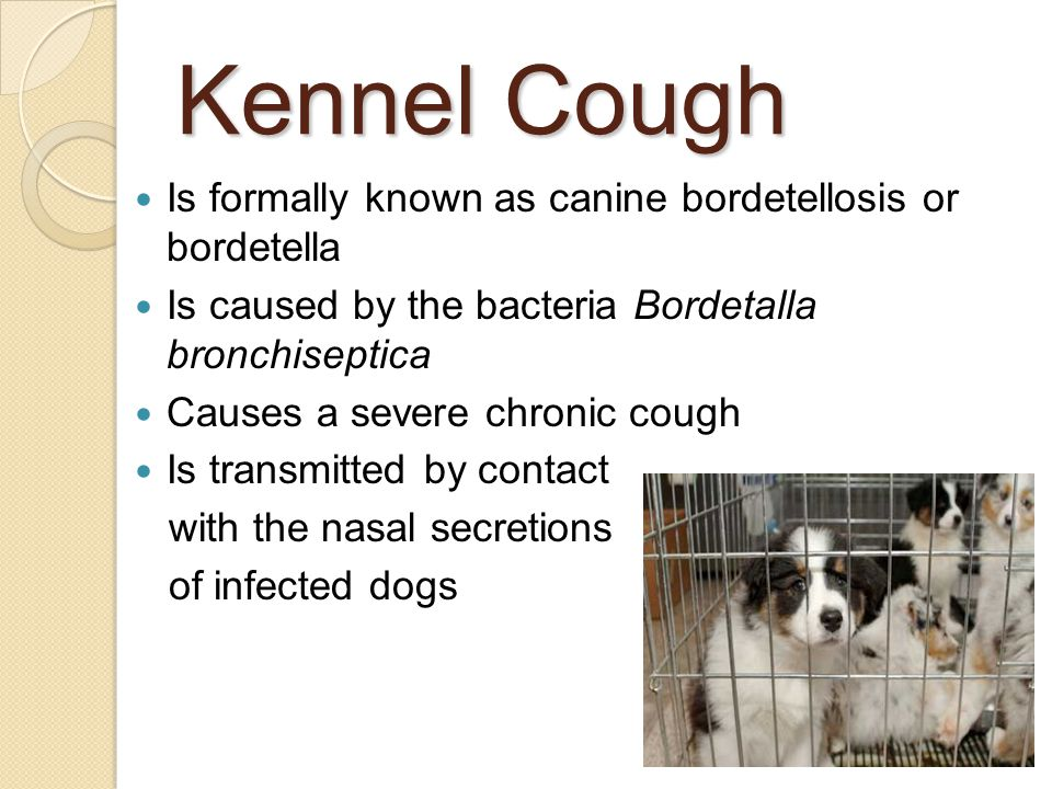 animal diseases caused by bacteria pdf