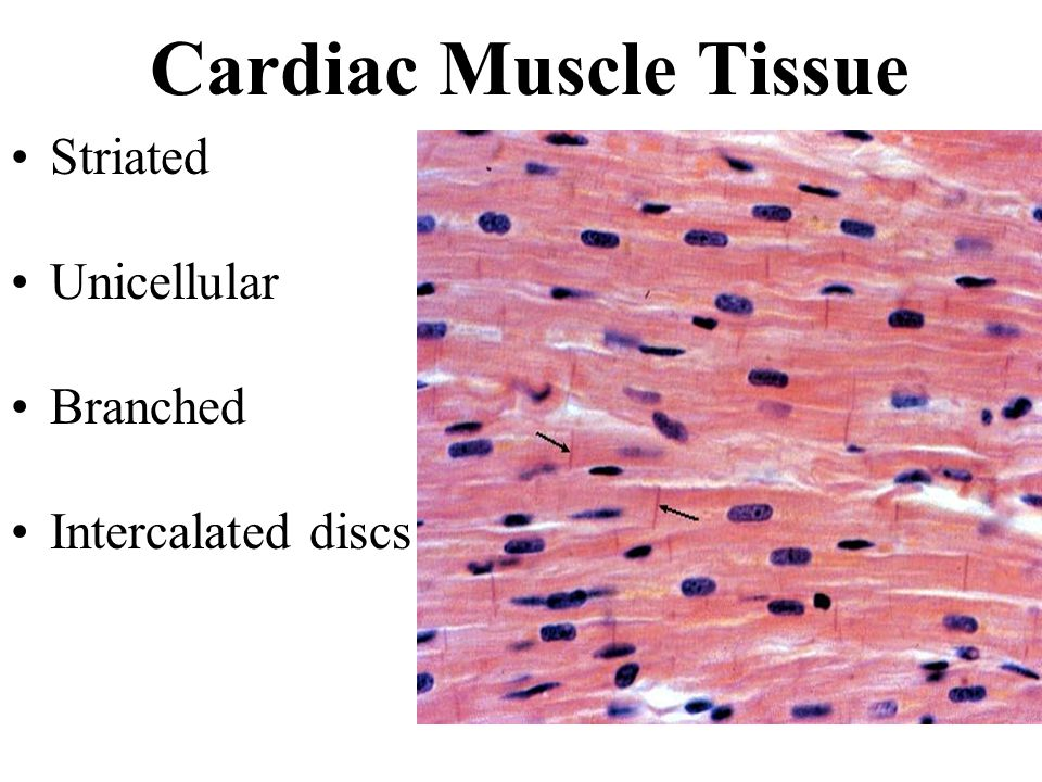 Muscles And Muscle Tissue Ppt Video Online Download