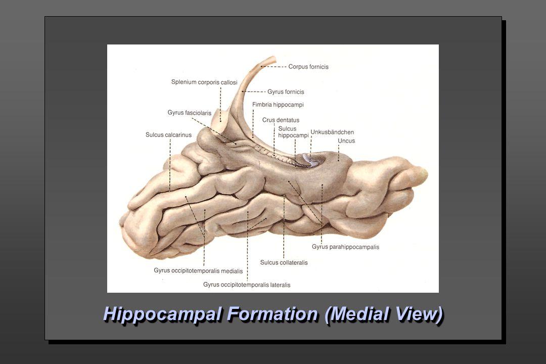 Limbic System Won Taek Lee, M.D., Ph.D.. - ppt video online download
