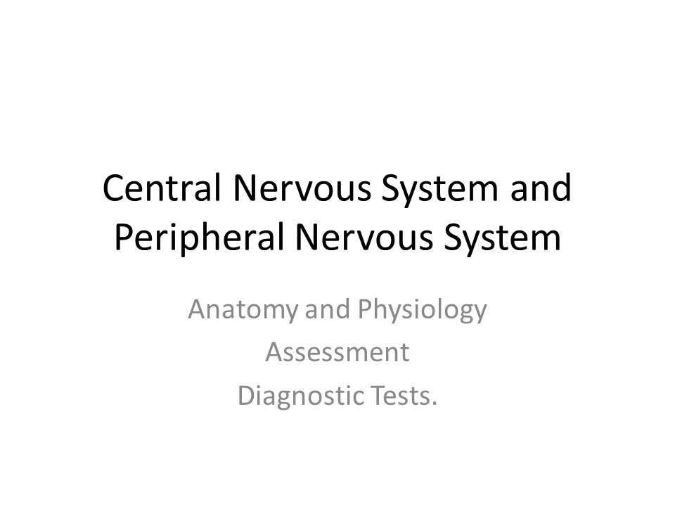 Central Nervous System and Peripheral Nervous System - ppt download