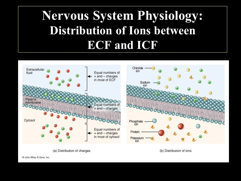 Nervous System Physiology: Distribution of Ions between ECF and ICF
