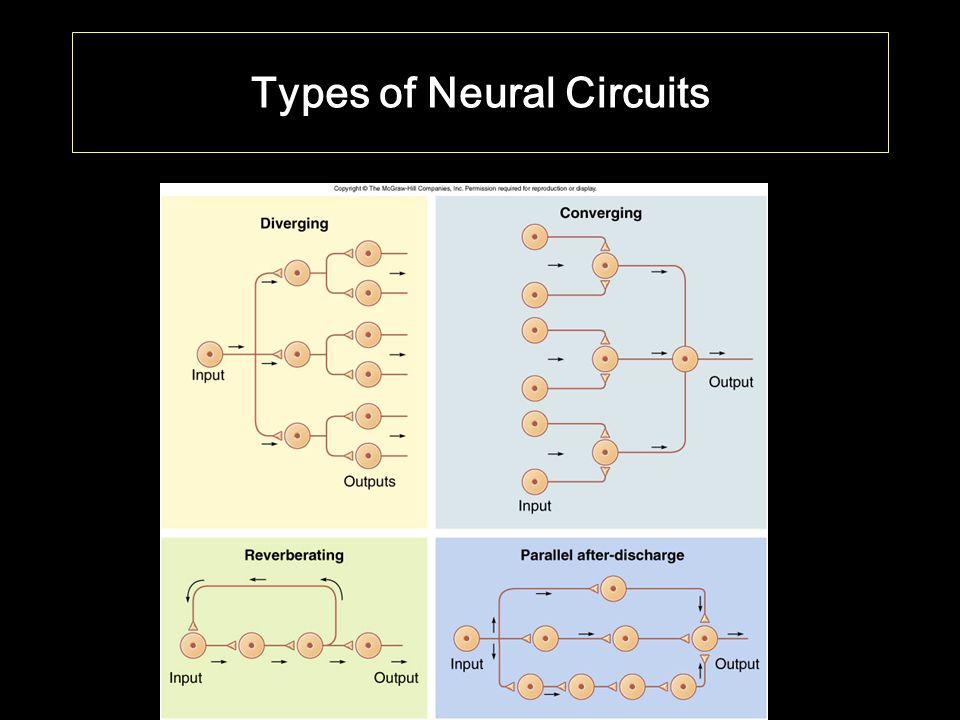 Types of Neural Circuits