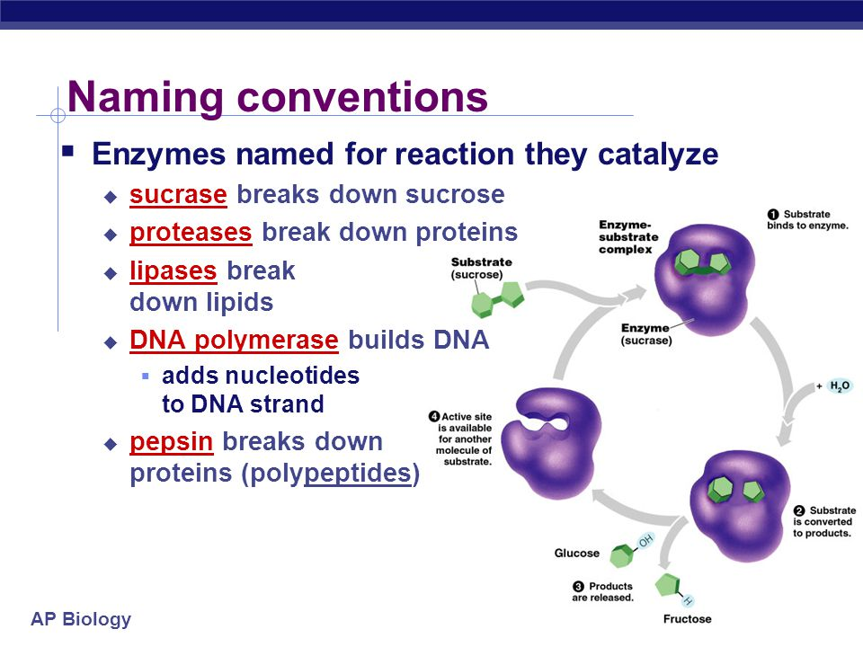 Naming conventions Enzymes named for reaction they catalyze