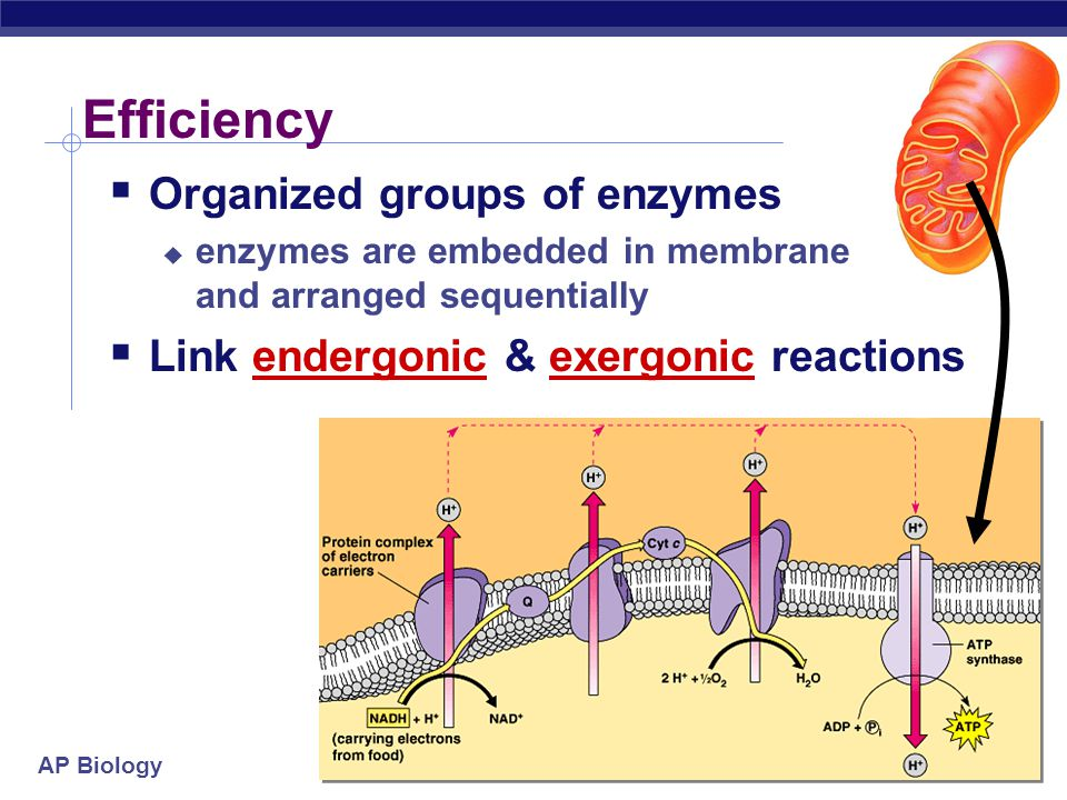 Efficiency Organized groups of enzymes