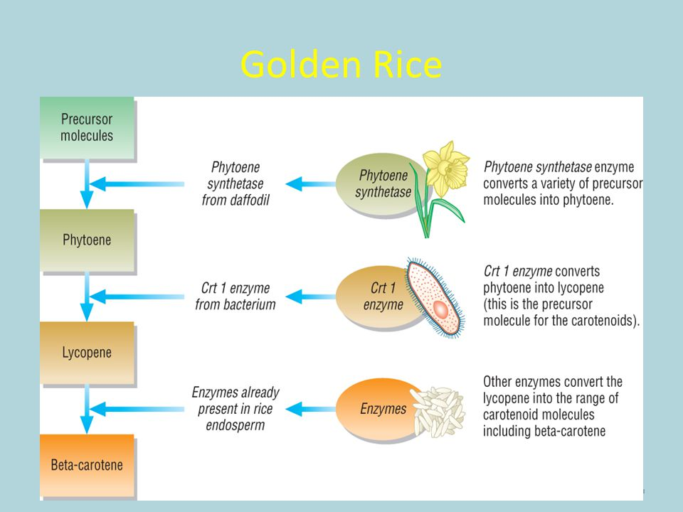 Golden Rice 14 © Pearson Education Ltd 2009