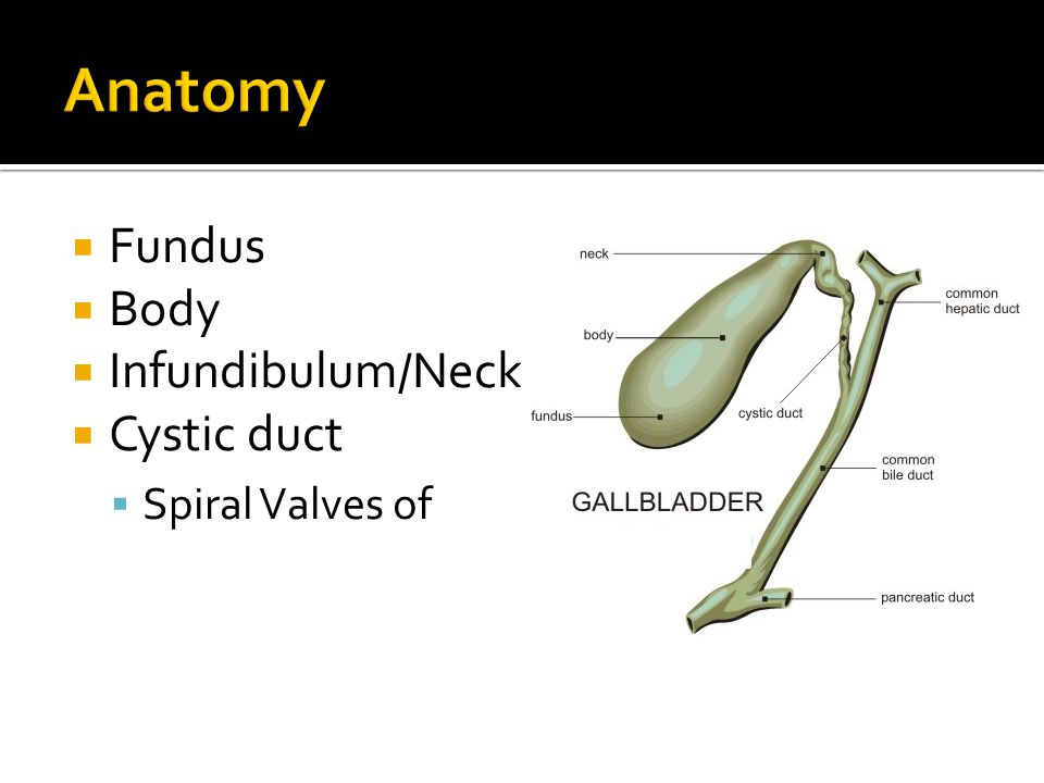 The gallbladder, gallstones, and beyond…. - ppt video online download