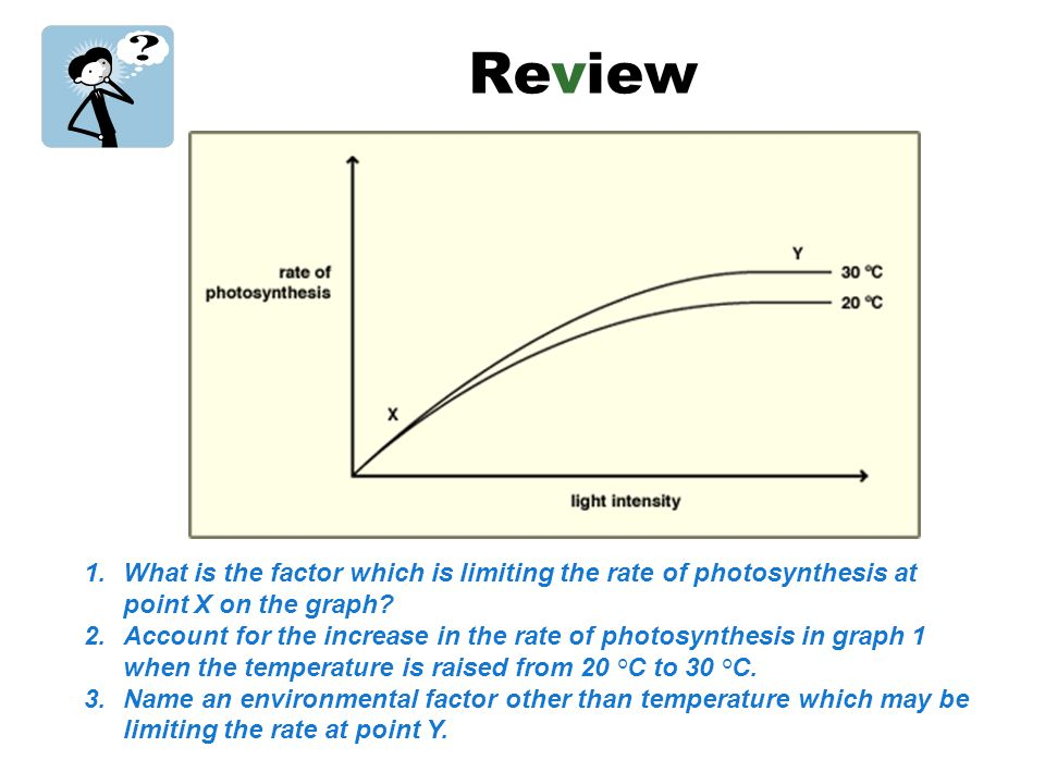 Factors affecting rate of photosynthesis ppt video online download review what is the factor which is limiting the rate of photosynthesis at point x on ccuart Image collections