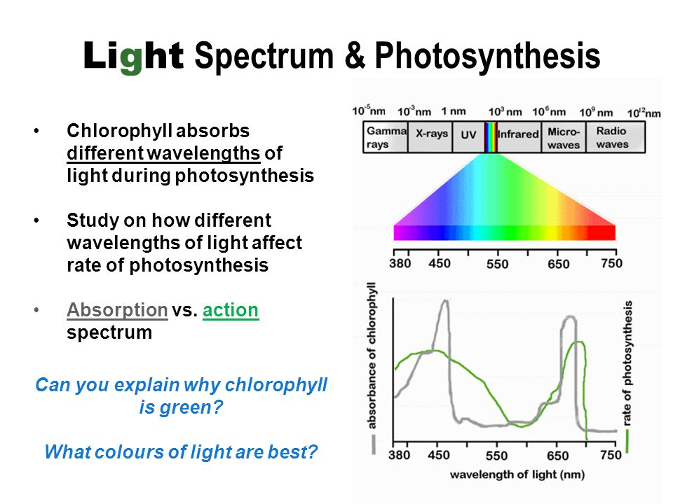 what affects the rate of photosynthesis