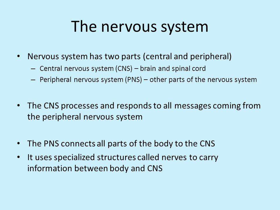 Human Systems Nervous System Sense Organs Ppt Download