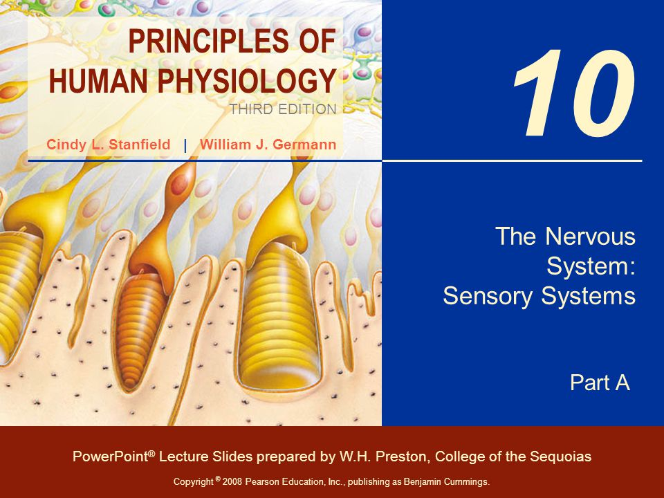 Attractive Sensory Systems Anatomy And Physiology Composition ...