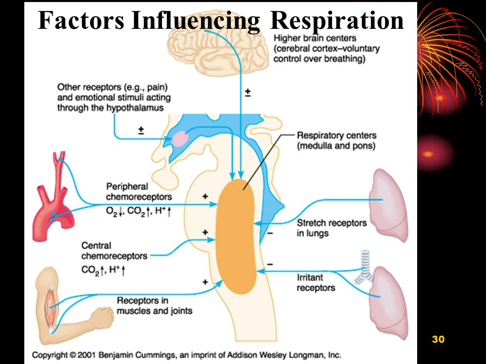respiration In physiology, respiration is the movement of oxygen from the outside environment to the cells within tissues, and the transport of carbon dioxide in the opposite direction the physiological definition of respiration differs from the biochemical definition, which refers to cellular respiration, a metabolic process by which an organism obtains energy (in the form of atp) by oxidizing.