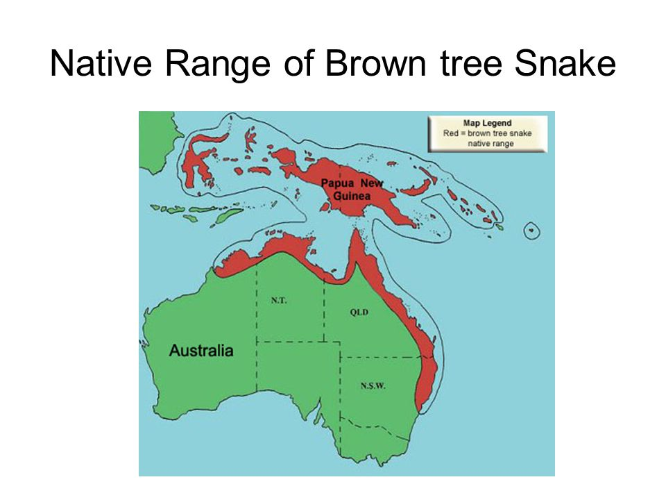 Native+Range+of+Brown+tree+Snake f the number of species decreases while population sizes increase