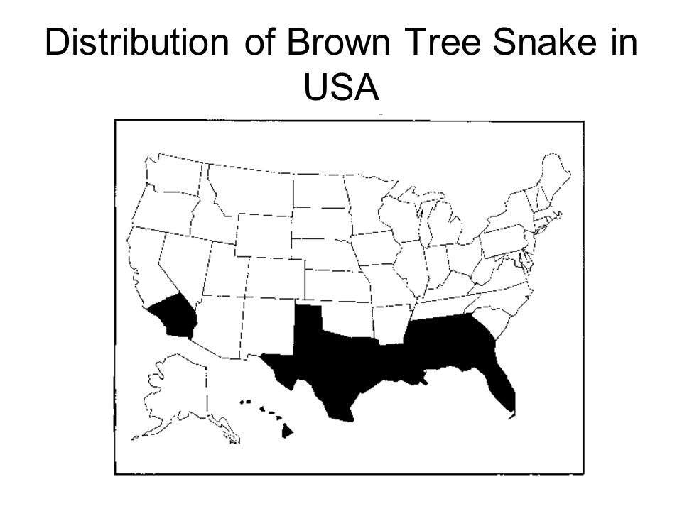 Distribution+of+Brown+Tree+Snake+in+USA f the number of species decreases while population sizes increase