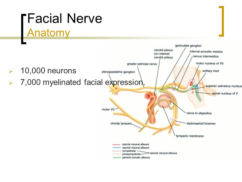 Sex hot diagram picture facial nerves