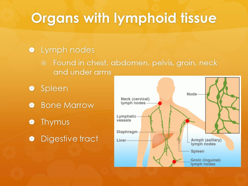 Organs with lymphoid tissue