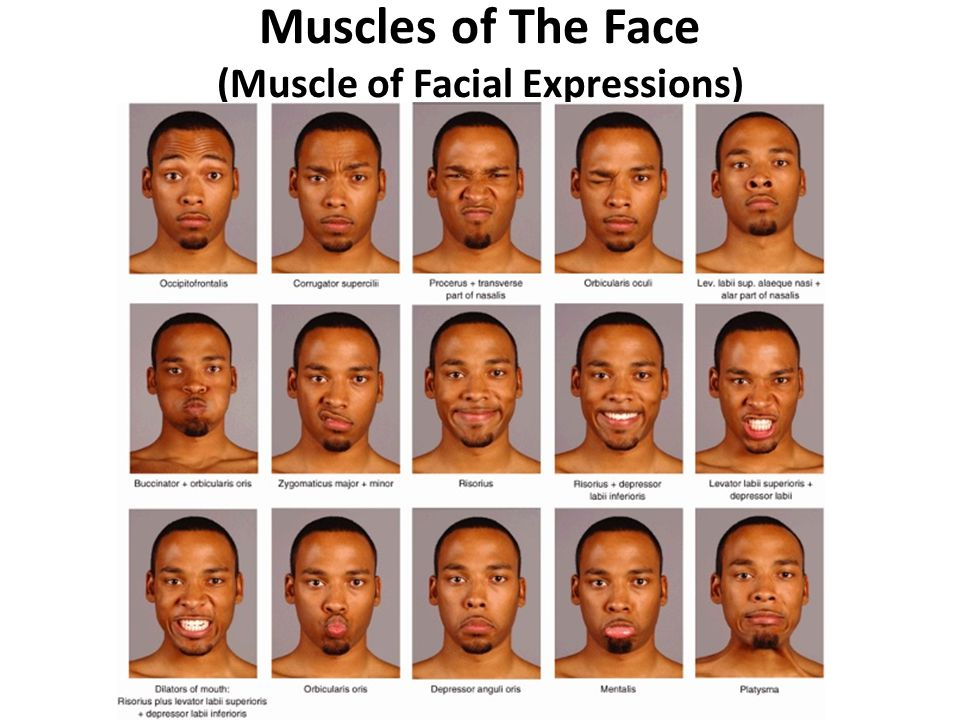 Facial Muscles Anatomy Ppt