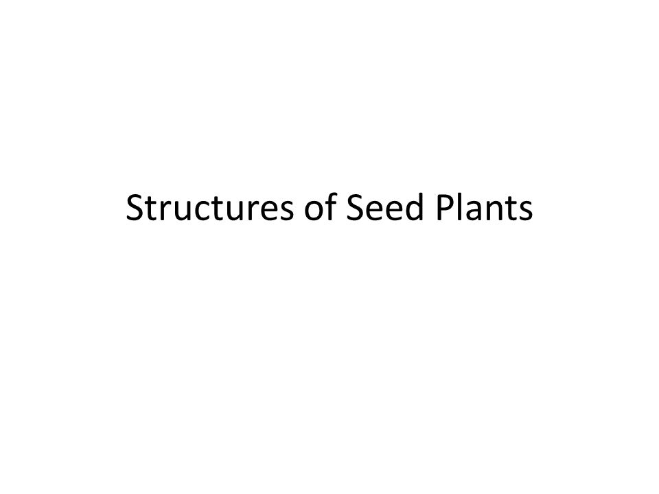 Structures of Seed Plants