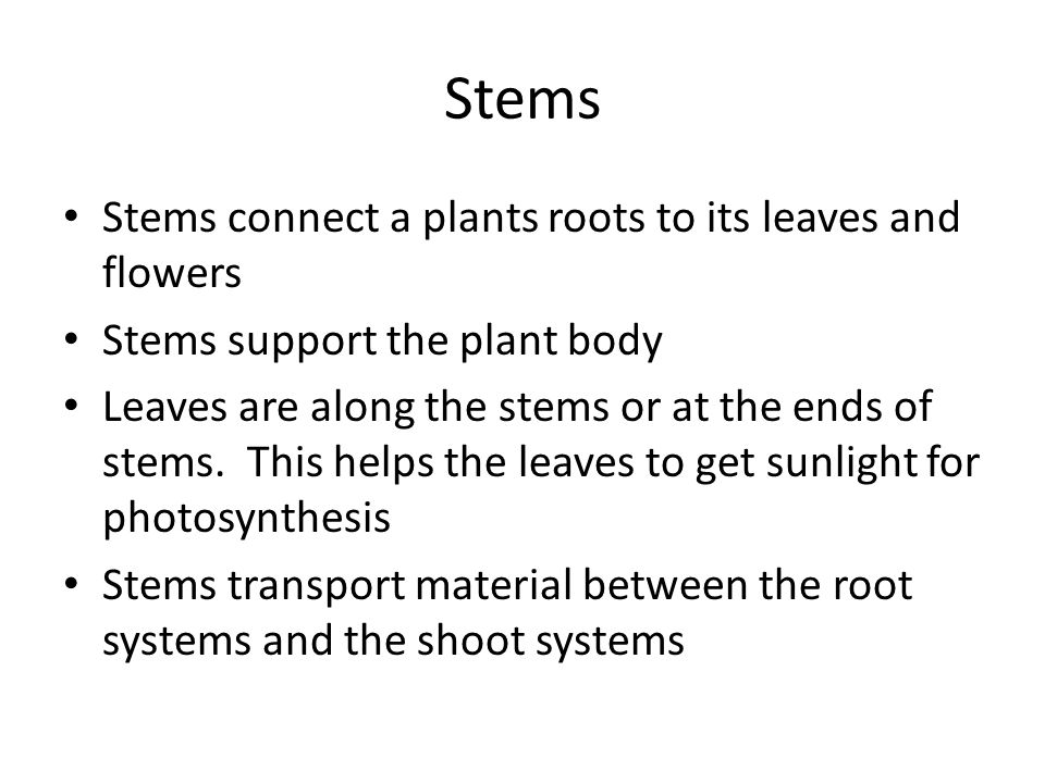 Stems Stems connect a plants roots to its leaves and flowers