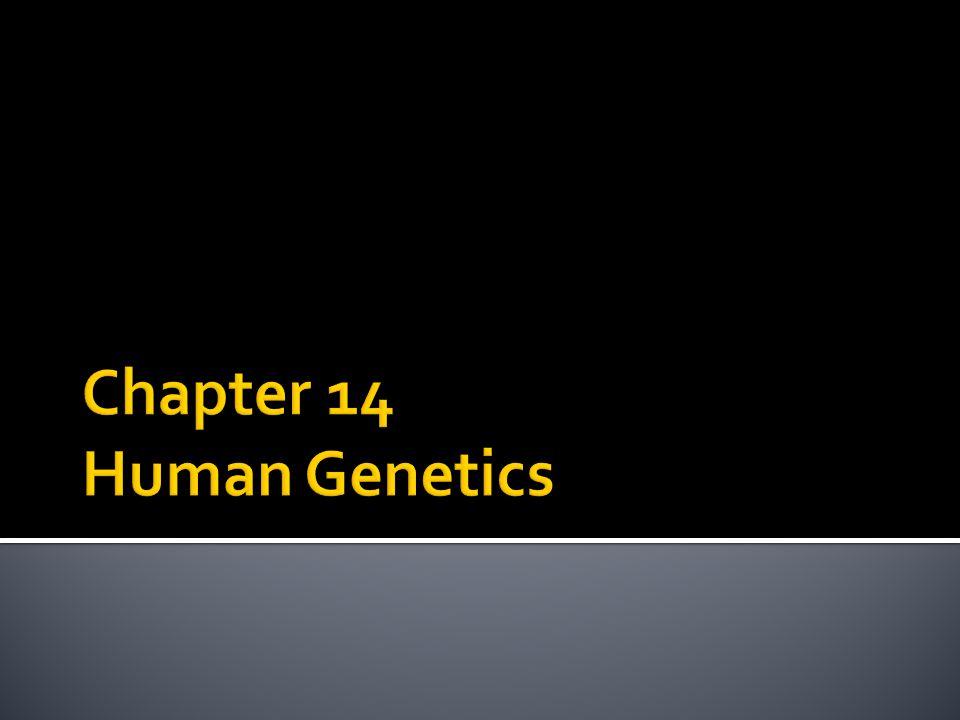 chapter 14 human genetics ppt
