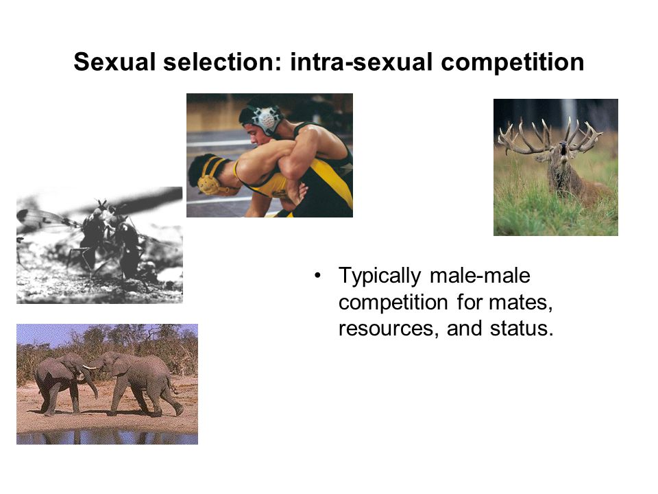 Intrasexual competition in humans