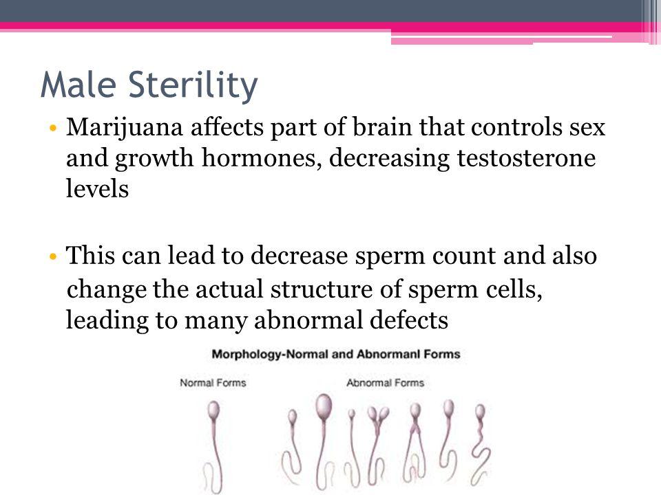 Japan sex improve sperm motility and morphology tight