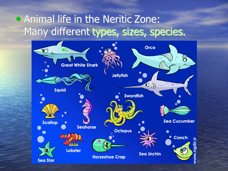 what is the neritic zone