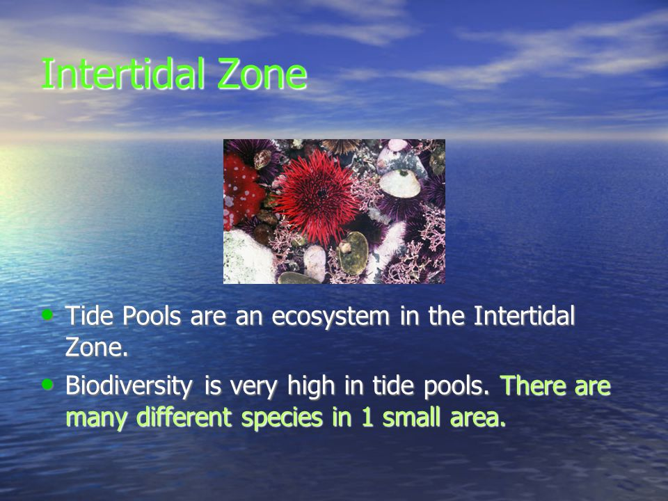 Ocean Zones Layers The Ocean Is Divided Into Three Zones Across