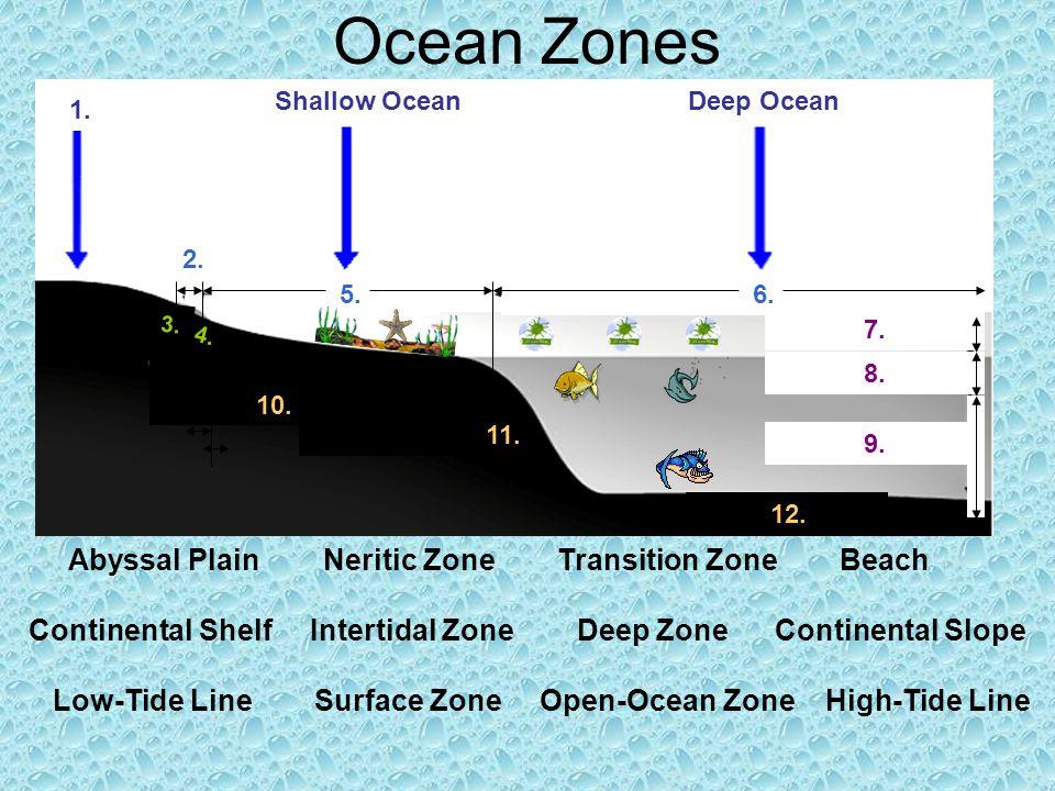 Ocean zones ocean life and ocean chemistry ppt video online download 3 ocean zones abyssal publicscrutiny Gallery