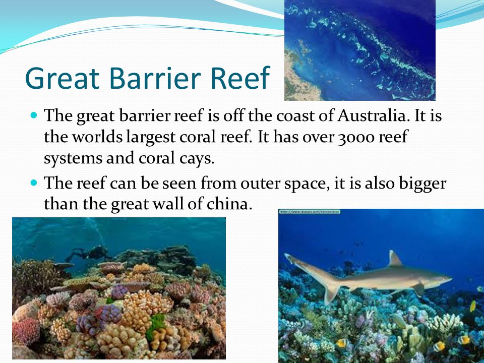 Coral reef presentation template for powerpoint and keynote | ppt star.