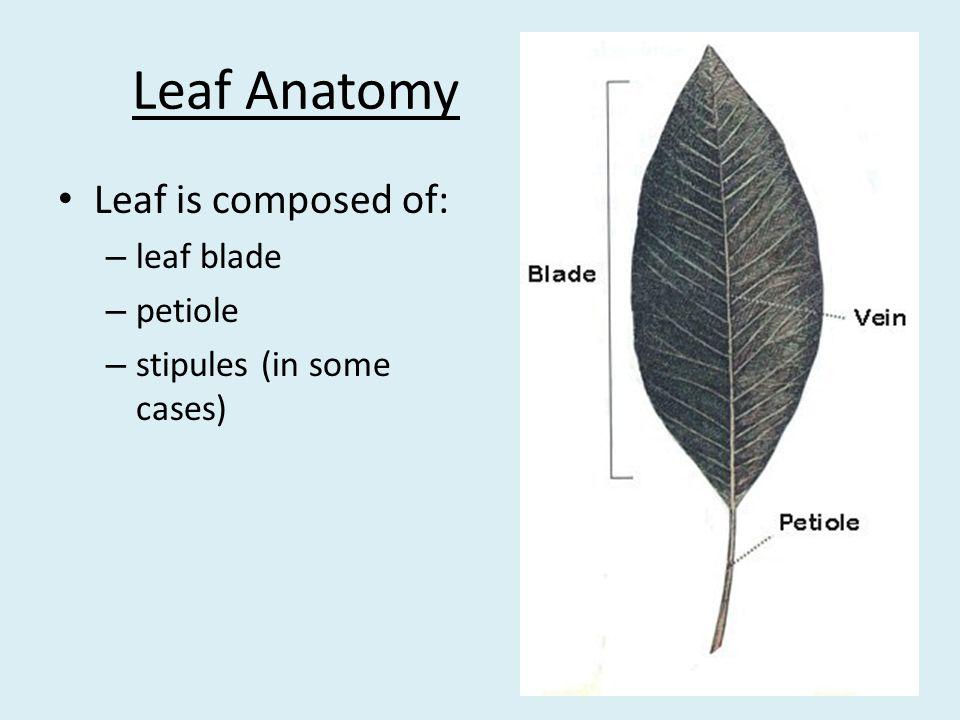 Botany Handbook for Florida - ppt video online download