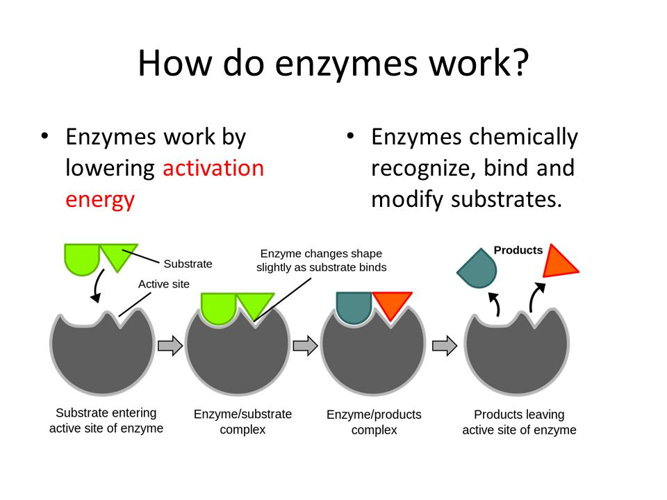 How do enzymes work Enzymes work by lowering activation energy