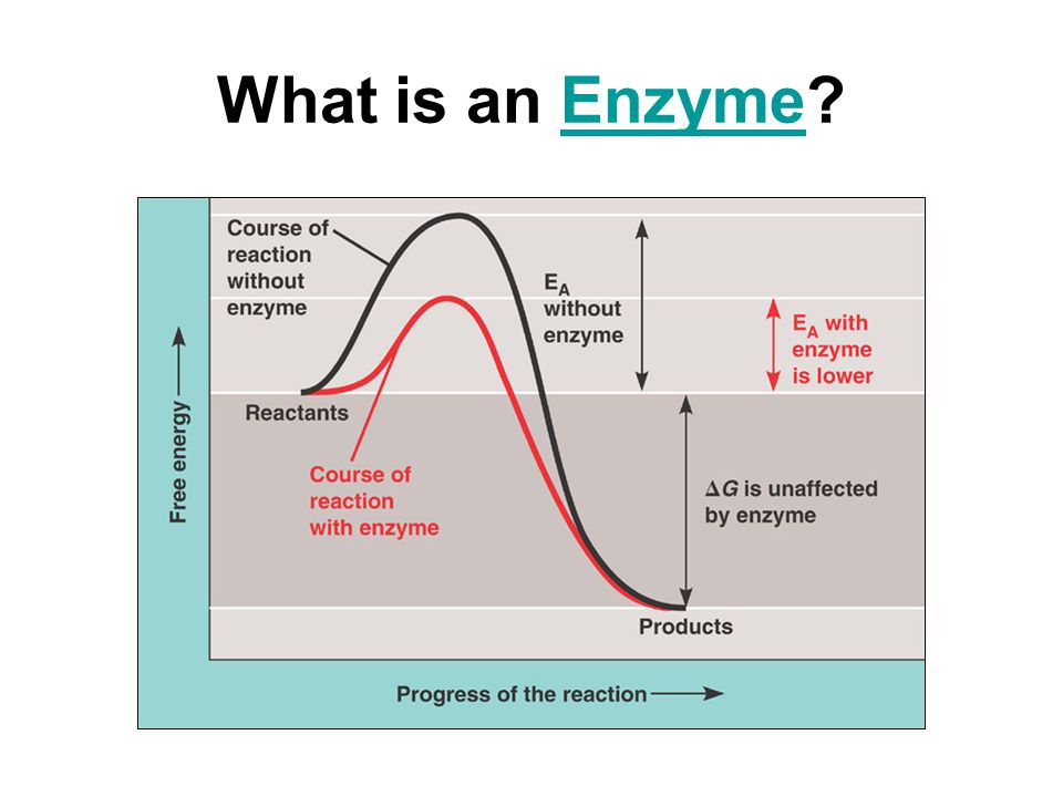Exothermic Reaction Diagram Enzyme Product Wiring Diagrams