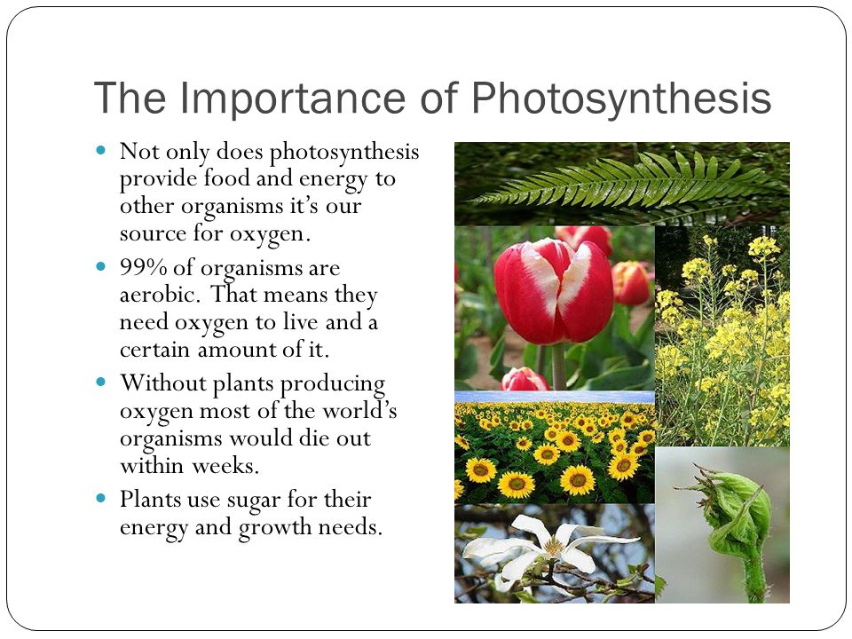 explain the importance of photosynthesis