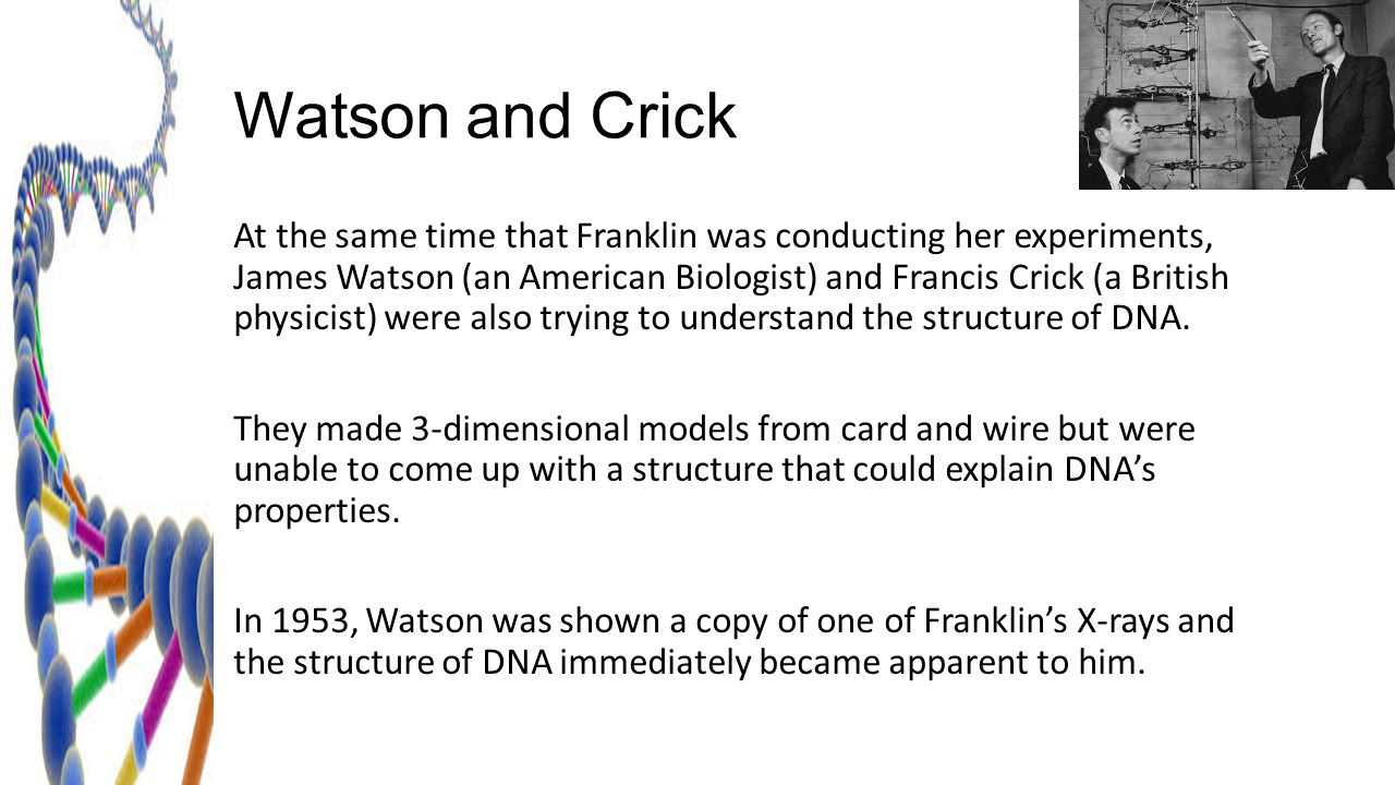 The Structure of DNA Mendel Watson Chapter 12.2 Crick Franklin ...
