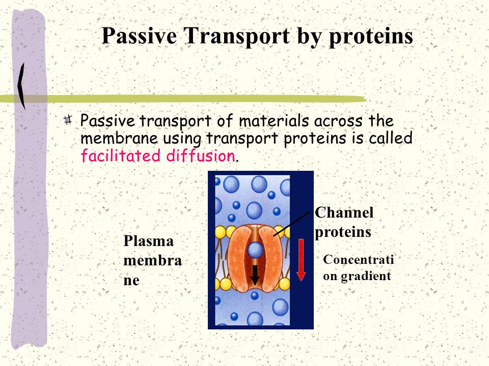 Passive Transport by proteins