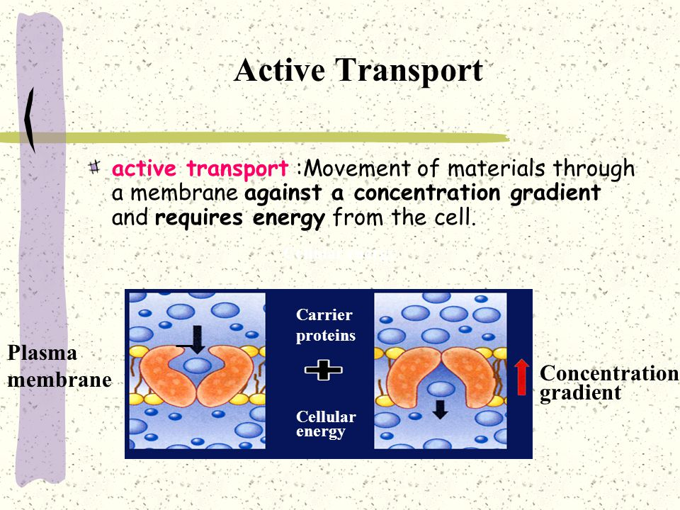 Active Transport active transport :Movement of materials through a membrane against a concentration gradient and requires energy from the cell.