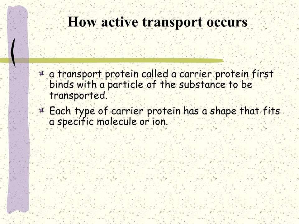 How active transport occurs