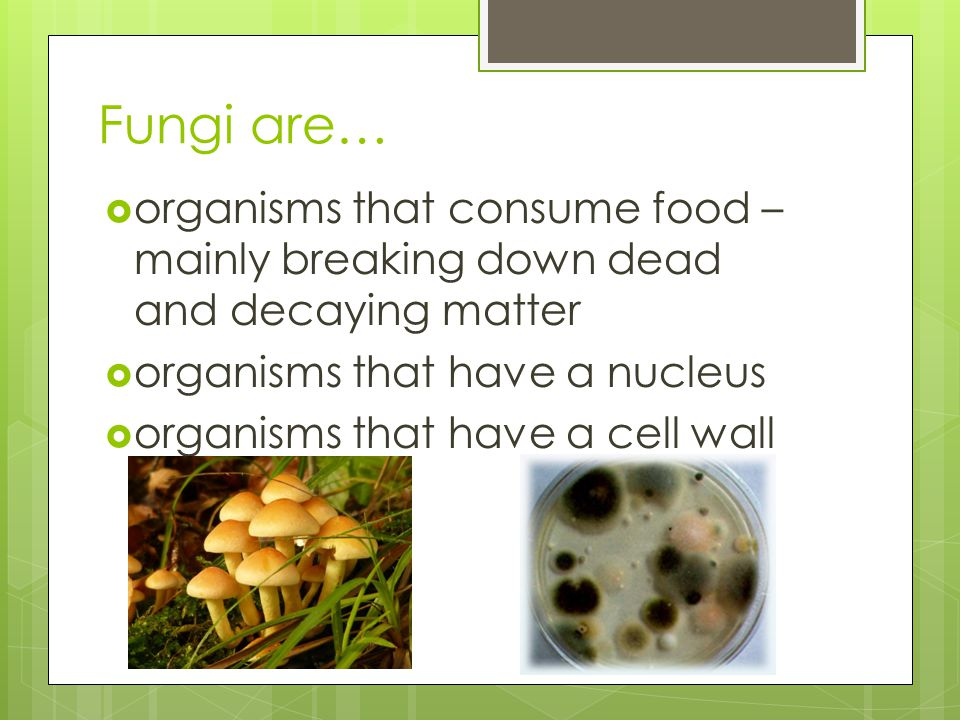 Fungi are… organisms that consume food – mainly breaking down dead and decaying matter. organisms that have a nucleus.