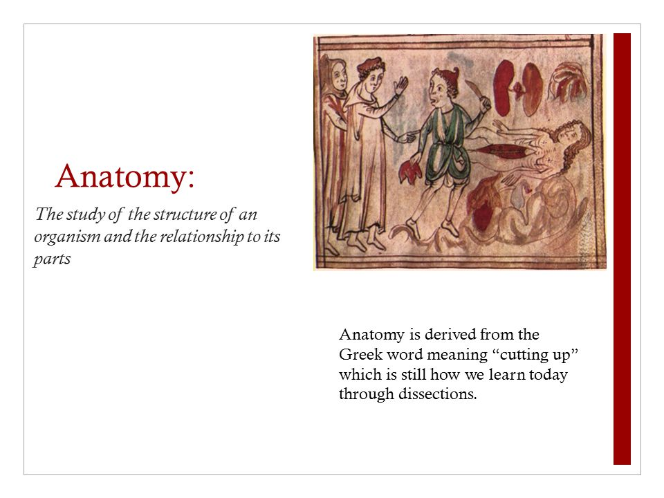 Amazing Anatomy Greek Meaning Gift - Anatomy And Physiology Biology ...